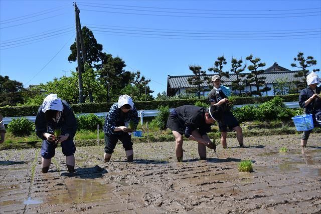 「新潟米作りワークショップ(田植え)」2日目