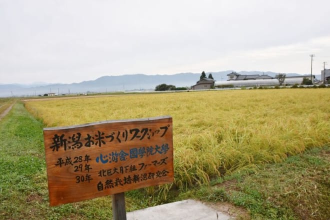 H30新潟米作りWS02