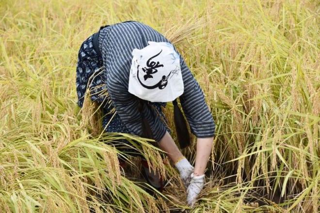 H30新潟米作りWS01