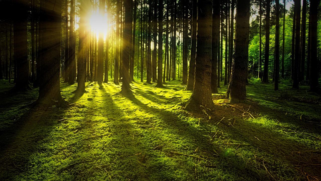 森林の保全に向けて、日本だからこそできるSDGsがある。